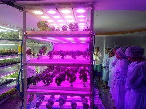 visit-to-hydrophonics-facility-hi-medis-labs-pvt-ltd